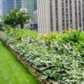 Green roofs- New trends in greening